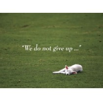 We do not give up...