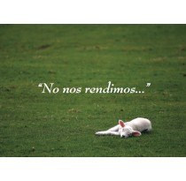 No nos rendimos...